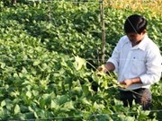 Farmers complete training for sustainable plant harvesting