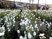 Da Lat flower festival to feature numerous activities