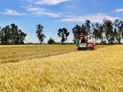 Panama businesses wish to establish rice-production ties with Vietnam