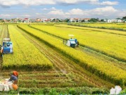 Restructuring agriculture for integration and development