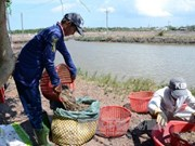 Thai company not qualify for exporting parent shrimp to Vietnam