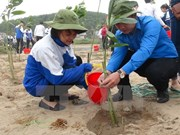 Hanoi becomes greener in lunar New Year