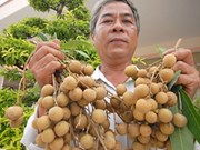 Edor longan shipped to US