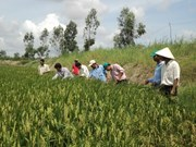 Sustainable agriculture transformation project launched in Hau Giang