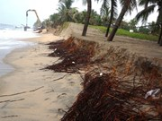 Sea erosion damages homes in Binh Thuan