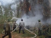 Binh Duong on alert for forest fires