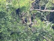 Nine endangered animals released into the wild at Phong Nha-Ke Bang