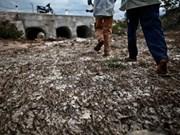 Minister urges Dak Lak to combat drought