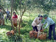 Labour productivity critical for growth: minister