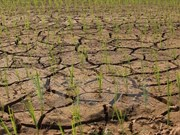 Drought may last several months: deputy environment minister