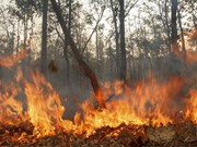 Indonesia tackles forest fires