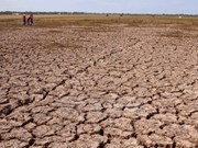 Mekong Delta struggling with drought, salt intrusion