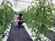 Smart farming a bright future for Vietnam