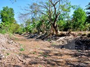 Drought causes heavy losses in Ca Mau