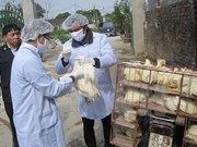 Localities warned of potential bird flu risks