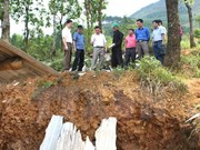 Hail storms kill one, injure two in Ha Giang