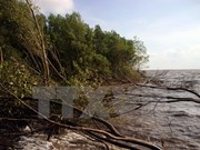 Ca Mau tightens management of coastal preventive forests
