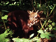 Exhibition raises awareness of endangered Saola protection