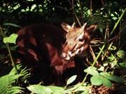 Exhibition raises awareness of endangered Saola protection