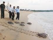 Rare sea turtles released in Quang Ngai