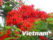 PM attends Red Flamboyant Flower festival in Hai Phong