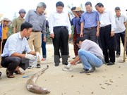 Deputy Minister: cause of unusual fish deaths to be announced