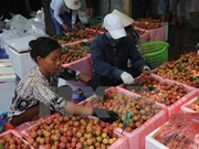 Australia recognises Vietnamese lychee irradiation centre
