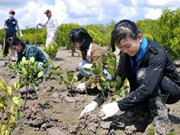 Central Highlands provinces to green additional 71,000 hectares
