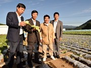 Japanese agricultural model eyes promoting links with Vietnam