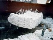 Pilot bidding set for sugar imports