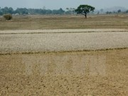 Measures to save Central Highlands from drought