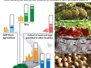 Mekong Delta agricultural production ensures domestic food security
