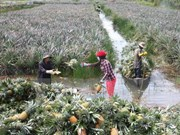 Forum promotes fruit production-consumption link in Mekong Delta
