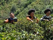 New projects to reduce poverty in Cao Bang, Bac Kan