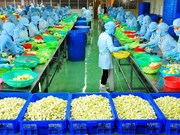 Factory processing fruit for export launched in Ben Tre