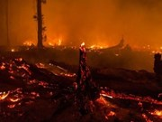 Indonesia declares emergency due to forest fires