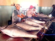 Vietnam's tuna exports up slightly
