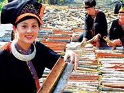 Yen Bai to hold Van Yen cinnamon festival in October