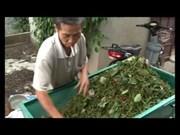 [Video] Nine-month pepper exports rake in 1.2 billion USD