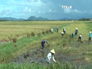 [Video] FAO: Vietnam hardest hit by climate change