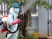 Central localities work to tackle dengue fever