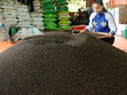 Prices of Vietnam's black pepper drop