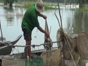 [Video] Late floods affect Mekong Delta residents