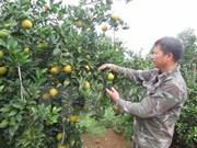 Cao Phong orange festival underway in Hoa Binh
