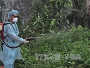 Binh Phuoc works to tackle dengue, Zika virus