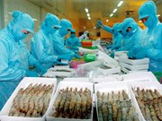 Vietnam – biggest processed shrimp supplier for Australia