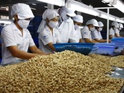 Cashew exports likely to reach 2.7 billion USD