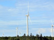Vietnam urged to tap wind power potential