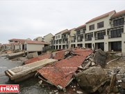 Cua Dai beach threatened by erosion and sea encroachment