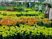 Tet flower festival opens in HCM City